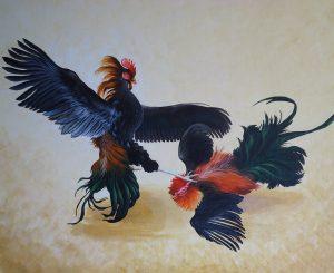Cock Fighting Gambling